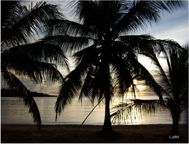 palmiers_roatan