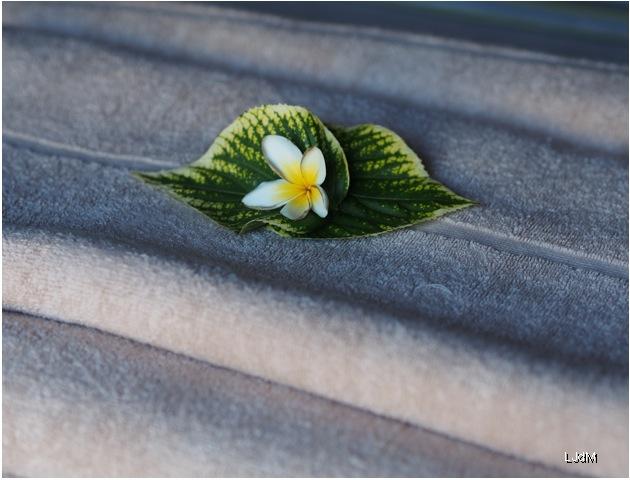 fleur_massage