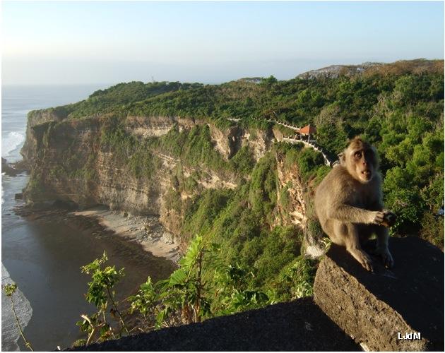 monkey_bali
