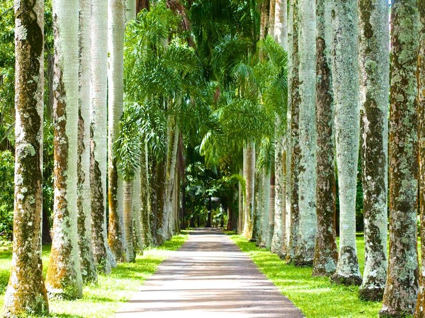 Le Jardin de Pamplemousses à l'Ile Maurice