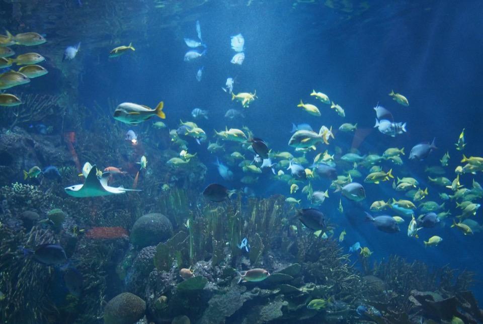 Aquarium de Valence