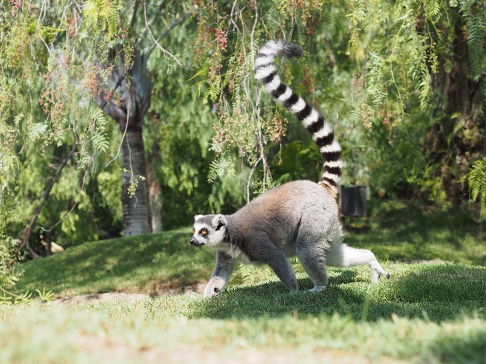 Madagascar à Valencia