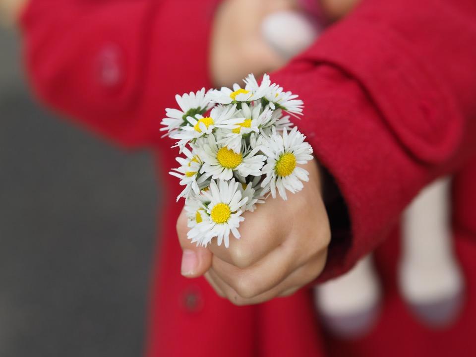 bouquet de paquerettes
