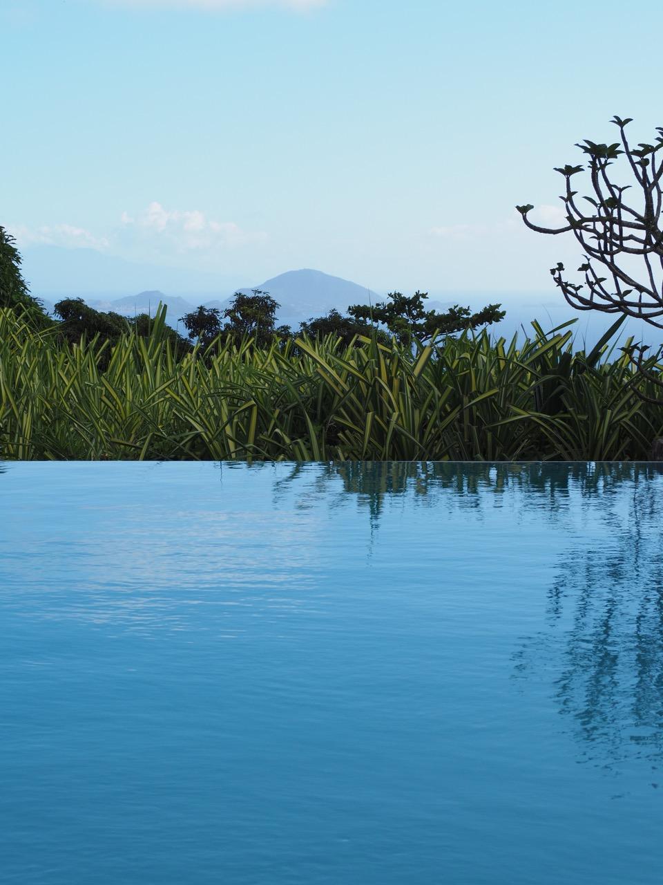 Jardin Malanga Guadeloupe