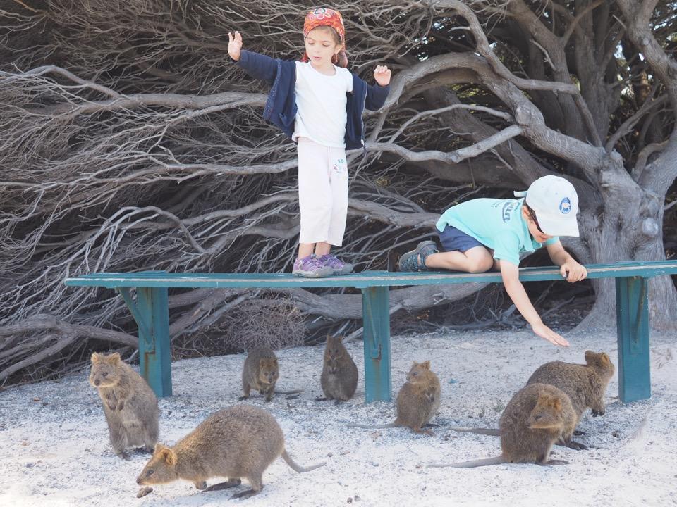 rencontres animaux