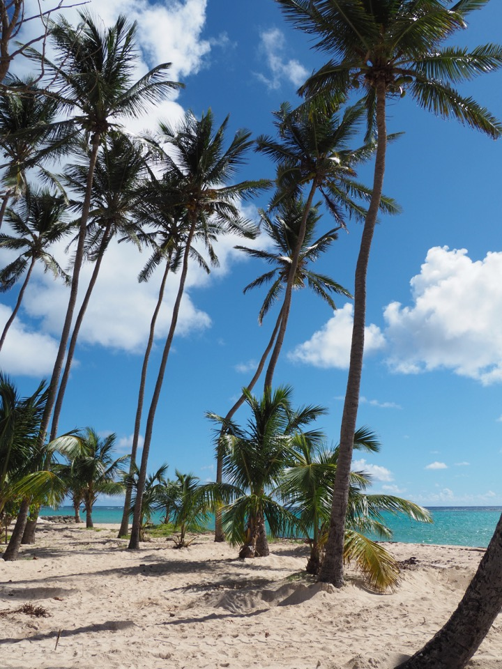 plages Marie-Galante