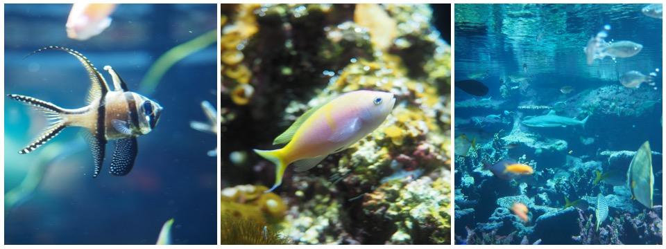 aquarium cherbourg