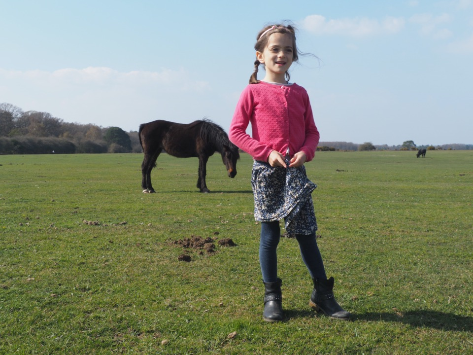 best family walk in new forest