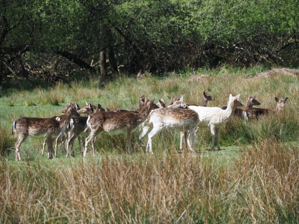 deer sanctuary new forest